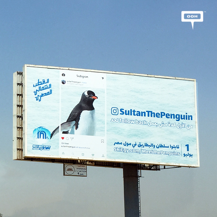 Mall of Egypt finally welcomes the penguins